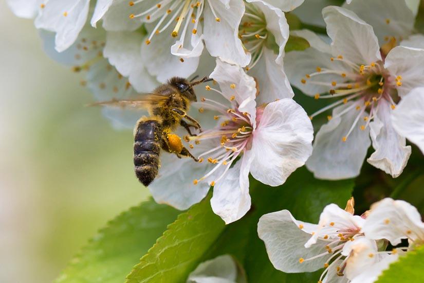Bienenpatenschaft bei Faunt